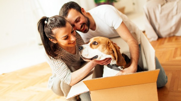 Moving pets to hawaii frequently asked questions faq for How much does it cost to move to germany