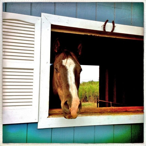 Find a great horse property on Maui