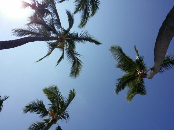 Magic Sands Coconuts