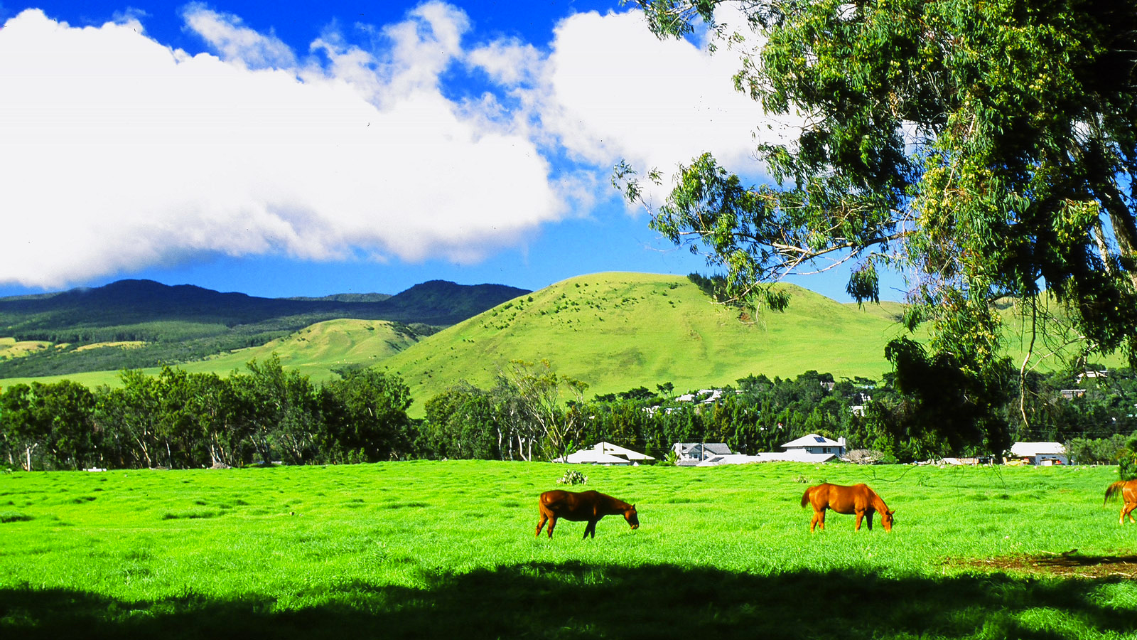 What Is It Like To Live In Waimea On The Big Island