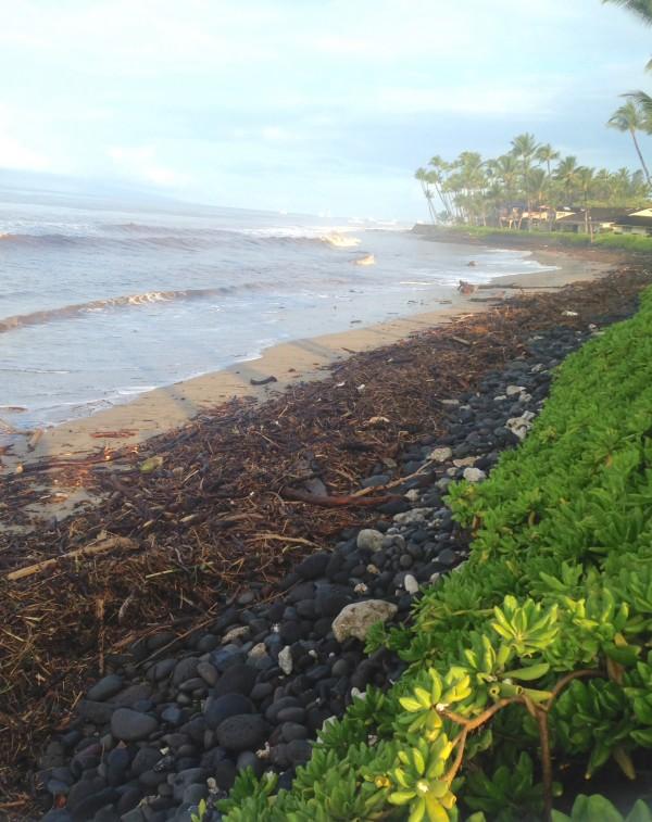 Puamana Beach September 14th, 2016 after heavy rains